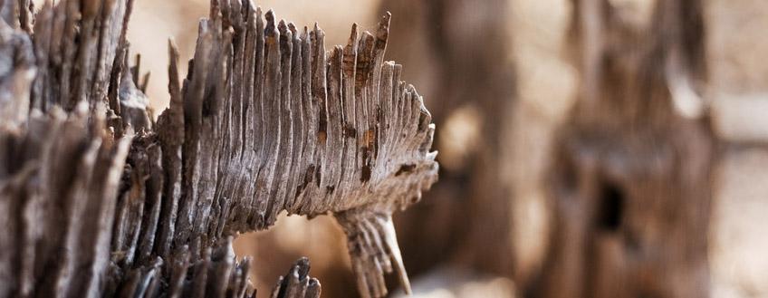 bannière termites